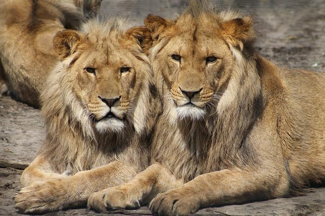 Gezellig een dagje naar de dierentuin met ter Beek Reizen