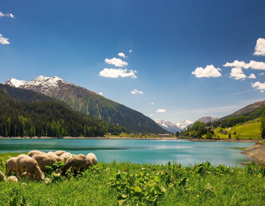 Busreis-Davos-Zwitserse-treinen-ter-beek-reizen-landschap-schapen-gallery